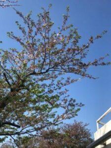 春の新生活スタート 社員Blog
